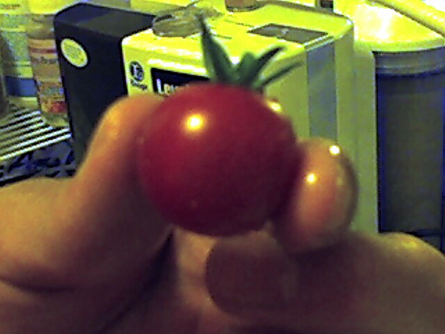 first_homegrown_tomato.JPG